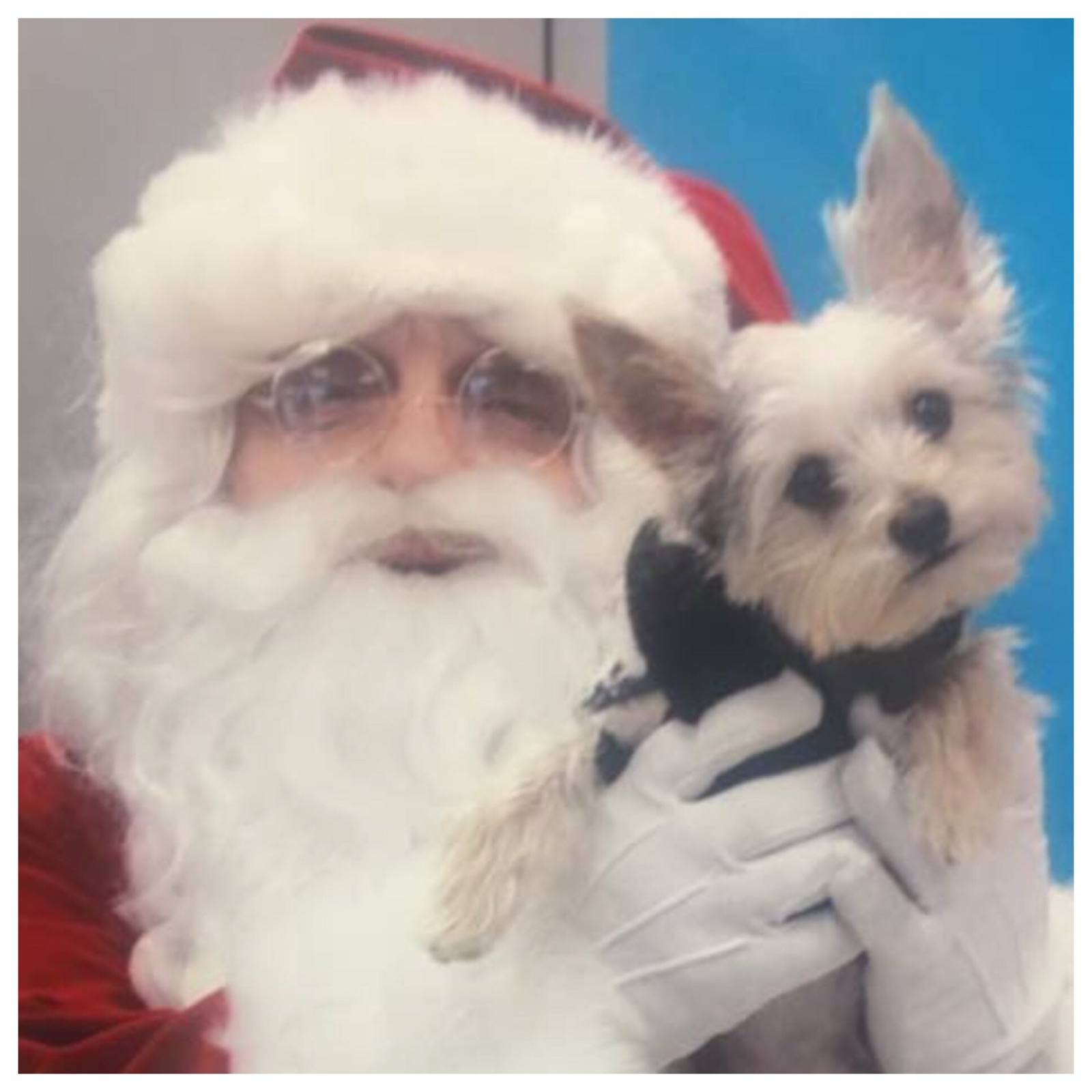 Santa with dog image
